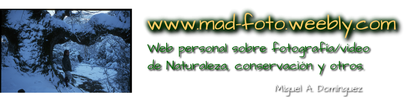 www.mad-foto.weebly.com